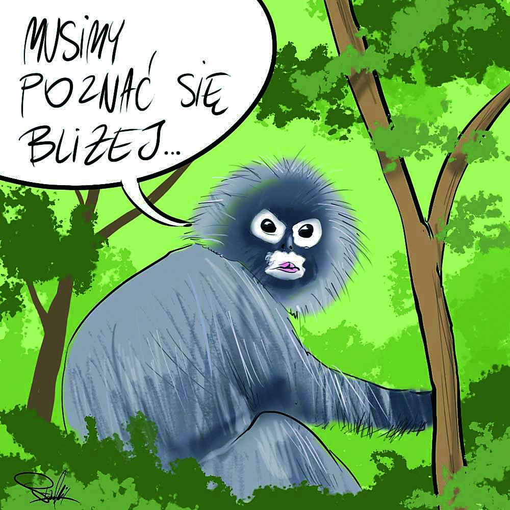 Małpa z zadartym nosem   Rys. Mirosław Stankiewicz