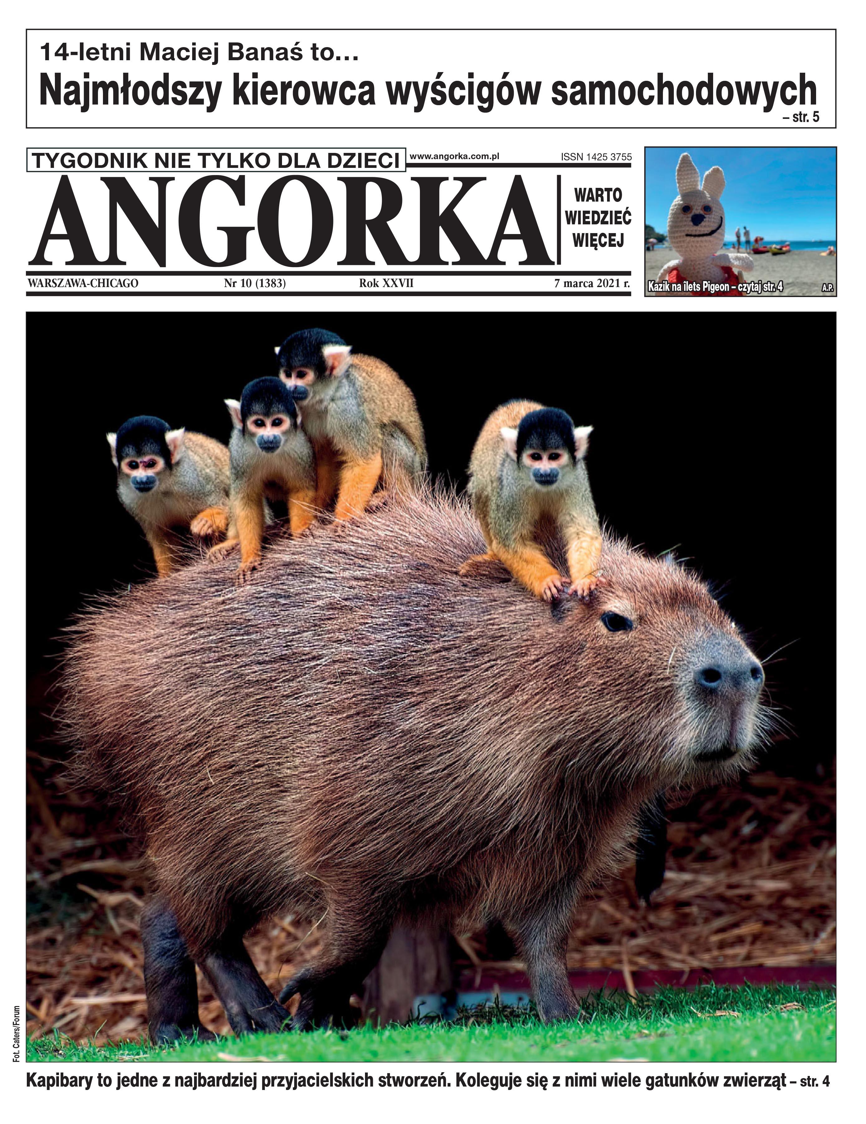 ANGORKA 10/2021