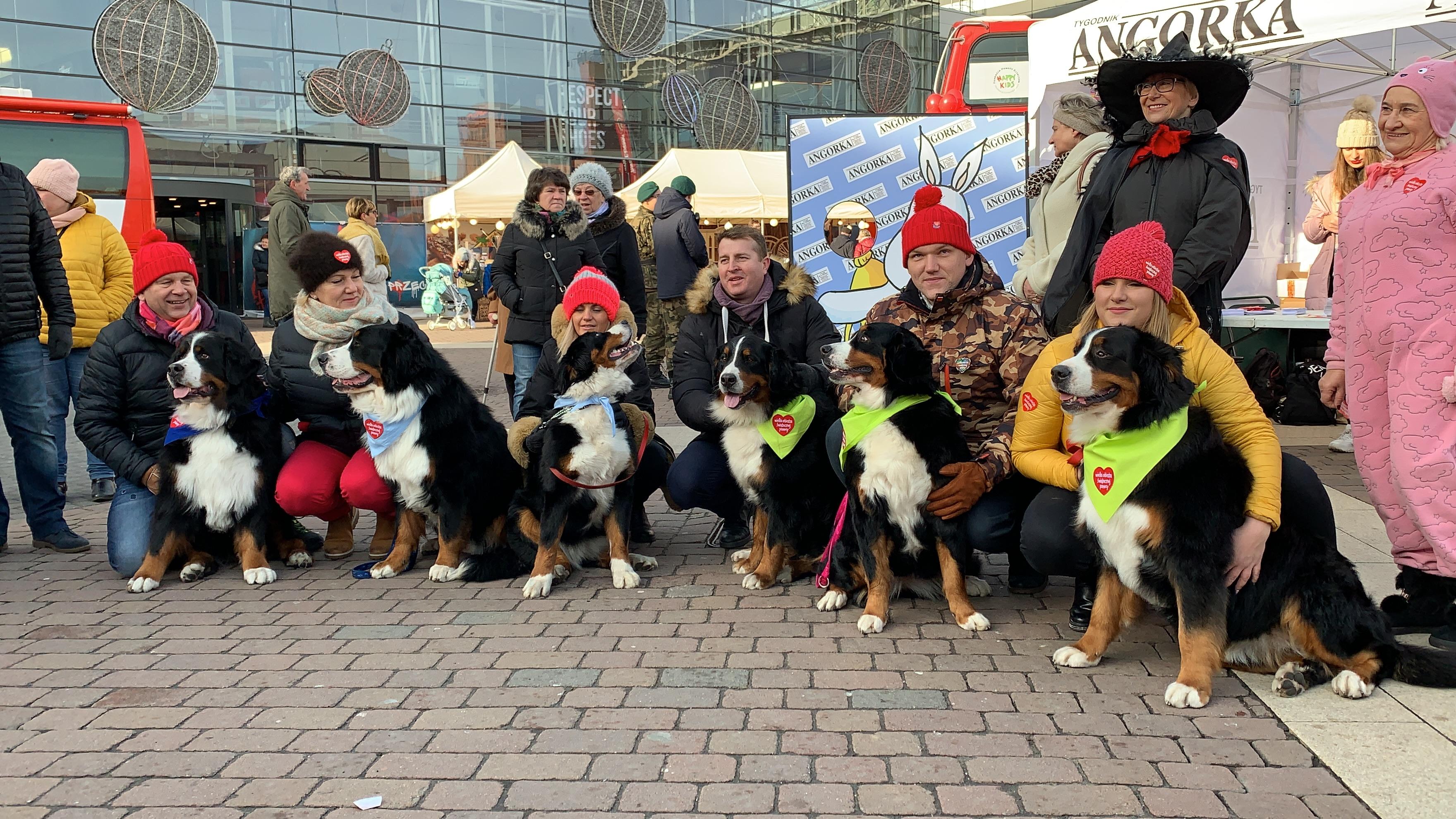 Dużą atrakcją były berneńskie psy pasterskie