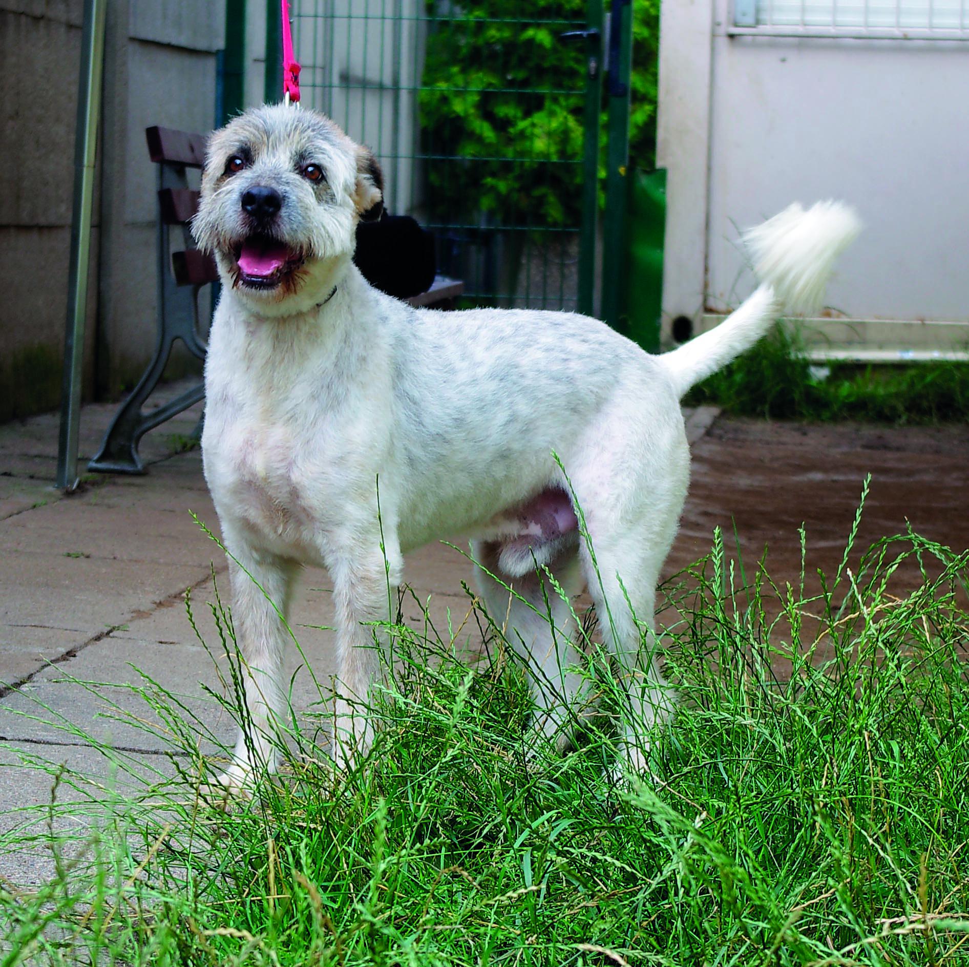 Opowieści ze schroniska: Fafik – pies dla aktywnych
